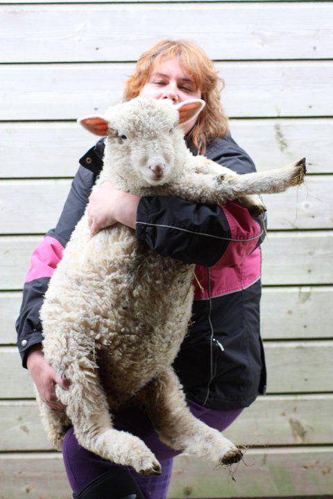 Emma-and-sheep