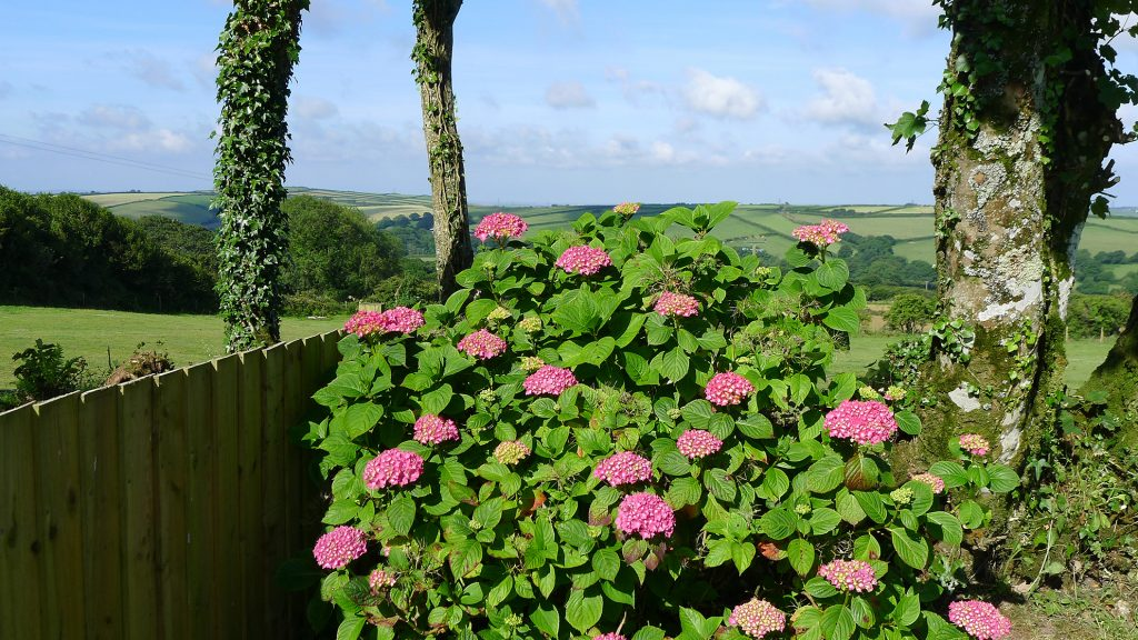 flowers-at-steppes-2